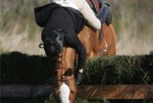 I ❤️ horses
