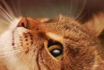 Gatti ... che passione!