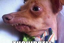 Tuna the Dog
