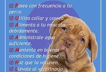 Tips para cuidar de tu mascota. / Todo lo relacionado con el cuidado de tu mascota.