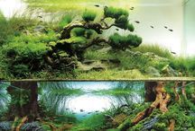 Aquascaping inspiration / by Hugo Andrade