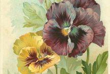 láminas con flores