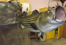 The ULTIMATE Mack Daddy of all fish mounts / Imagine waking up every morning to a beautiful fish mount hanging from your ceiling! Make all of your friends jealous with some of these mounts!