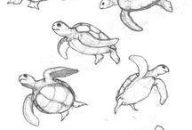 Dibujos mar