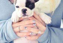 French bulldogs / Frenchies, French bulldog puppies and dogs! / by Tiffany Vela