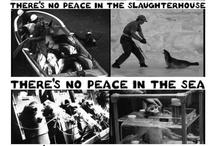 Animal Rights <3