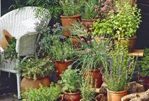 Gardening ideas I love.