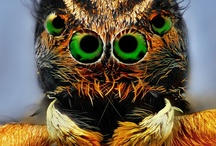 spider lovely eyes :D