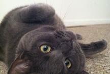 My favorite kittehs
