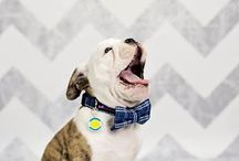 Dapper Dogs ~ Dog Couture / Clothing, accessories, outfits & even bow ties to keep your dog looking good!