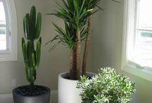 Växter kontor