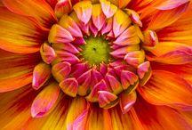 Blumen Fotografien