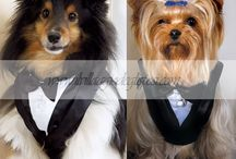 Animalerie / Accessori per i vostri amici a quattro zampe/ Pet Accessories