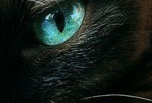 일러스트레이션-고양이