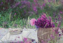 Loving Spring time <3