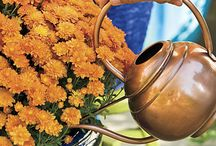 Fall Flowers / How to keep color in your flower pots and beds all year long!Annuals and Perennials perfect for Fall in Colorado.