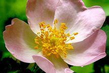 Happy 2015 ... / ... Dites-le avec des fleurs ! Anagramme végétal : remettez les initiales de chaque nom de plante dans l'ordre pour retrouver la formule de saison !