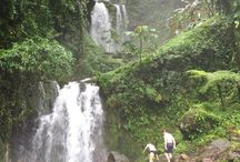 Costa Rica Honeymoon / Ever thought of a honeymoon in Costa Rica?  Here is some inspiration!