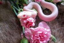 Toni snake