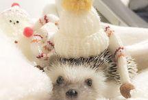 hedgehog and pet