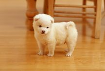 fluffy marshmallow!