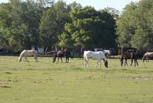 Moving to North Fort Myers, Florida / all around North Fort Myers - a rural community with special charme