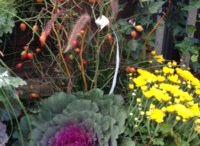 Garden shopping / For Smart Creative Style 2013 / by Farida Zaman