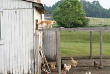 Farmliving