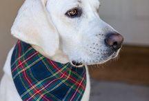 Woof Bandanas / High quality dog bandanas. The ultimate bandana!