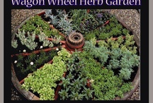 Herb Gardens / by Lucky Peach