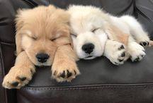 Pup-pups!