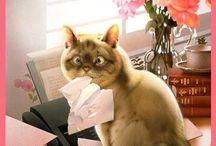 Print - Chat, cat
