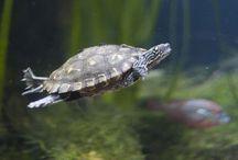 terrari tortuga
