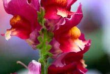pink / by Bridget Wareham