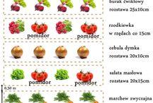 Ogród warzywny / Ogród warzywny