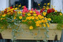Flower boxes and planters