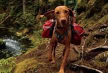 A Dog's Life / A tribute to ever hunter's best friend.