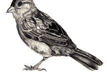Tattoos / Sparrow tattoo