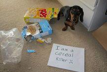 Dog Shaming...lol