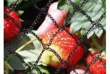 Garden Netting and Plant Protection Products / Garden Netting and plant protection products to protect fruit, vegetables, herbs or flowers against pests, insects and the weather - all safe and organic from Harrod Horticultural .