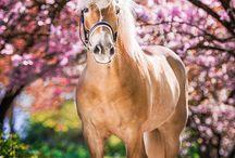 Paardjuuus