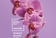 Radiant Orchid / ACME Studio loves Pantone's 2014 Color of the Year - Radiant Orchid!  Here are a few of our favorite products that feature the it-color.