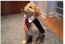 let's Harry potter
