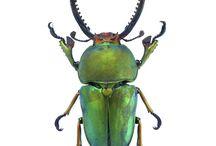 Insectos / Recordando mi infancia y mis colecciones