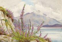 Flowers Margaret Tarrant