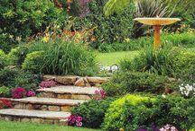 Gardening Ideas / landscaping