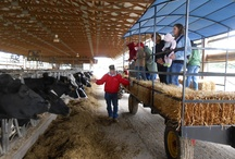 Dairy Tours