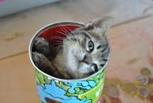 Gatti /cats