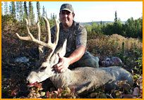 Mule Deer Hunting in Alberta Canada / Mule deer are found throughout Alberta. We have large bodied, heavy antler trophy mule deer in Alberta. Hunt mule deer in the early bow season and have a chance to harvest a P&Y class deer still in velvet.  Rut hunts are very exciting because bucks are exposed in the open running after does. As you can see, there are many B&C class mule deer harvested in Alberta.  Check out some of the outfitters and visit Alberta Outdoors at http://www.abhunting.com  to find a hunting outfitter to book a hunt