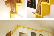 Casa x gatti